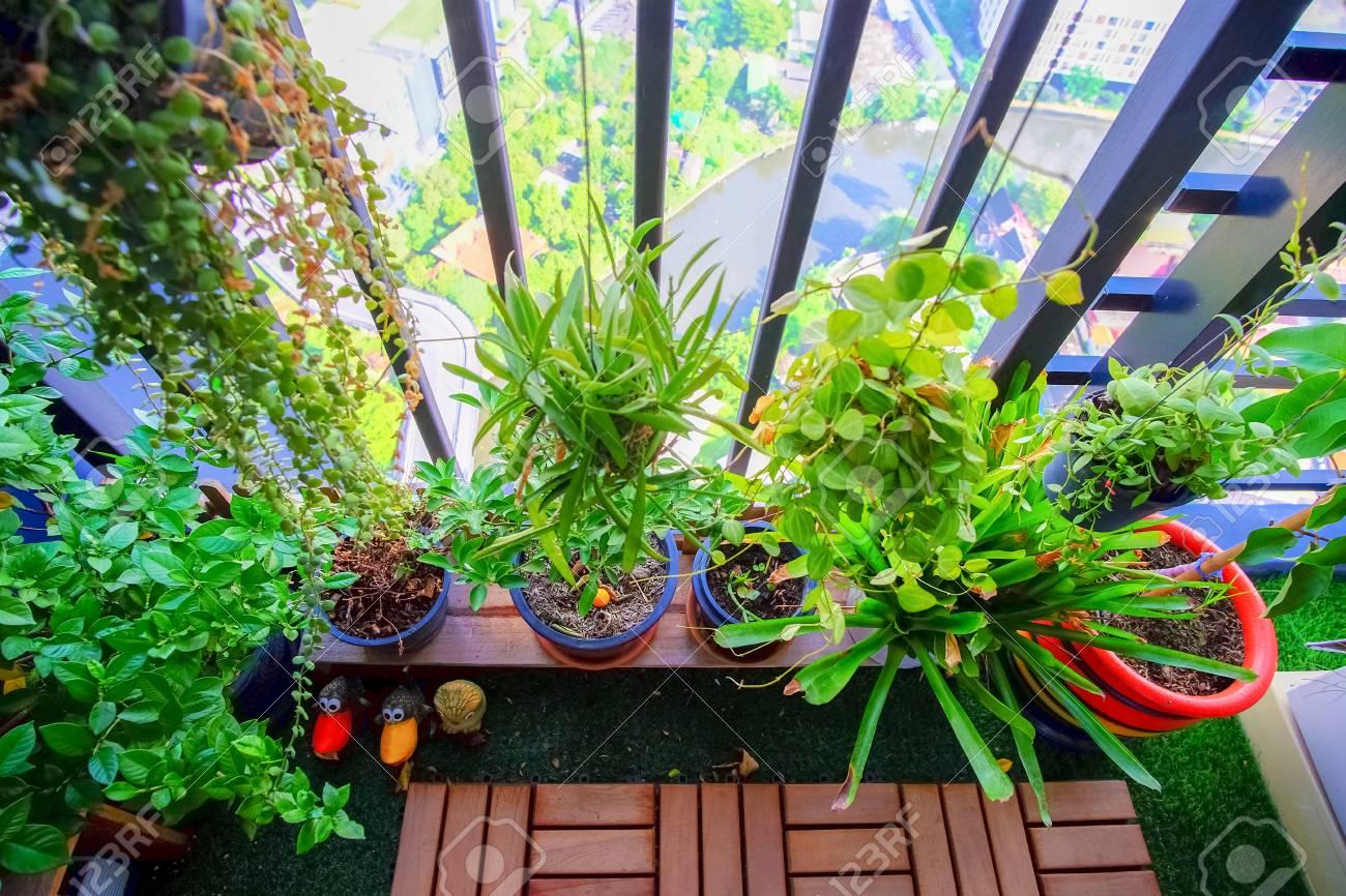 natürliche pflanzen in den hängenden töpfen am balkongarten