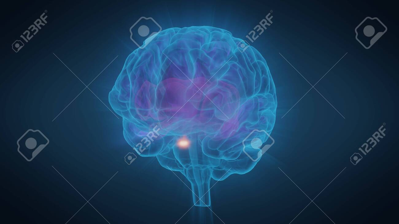3d illustration human brain with convolutions and a radiance of light - 146562911