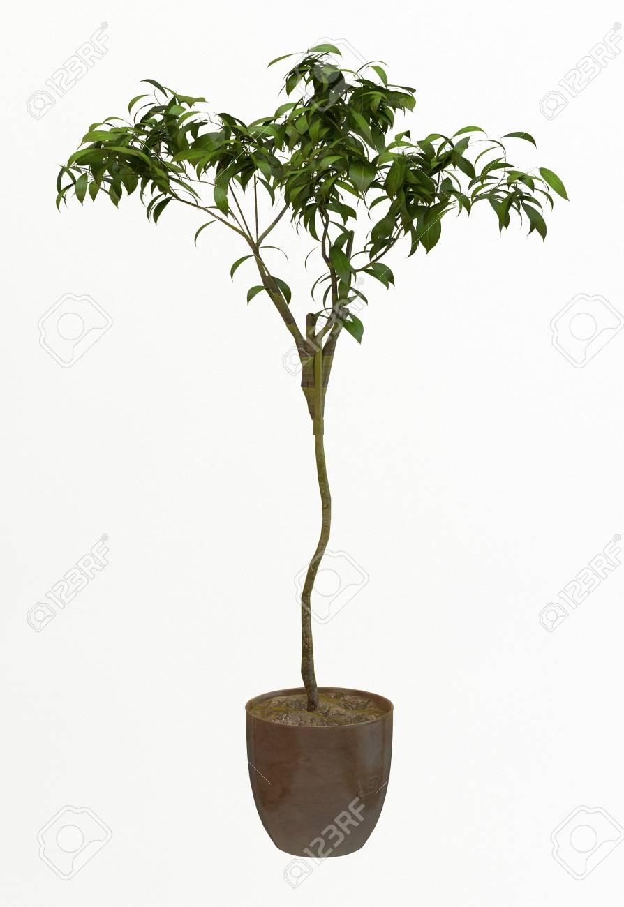 Small decorative tree Stock Photo - 10016867