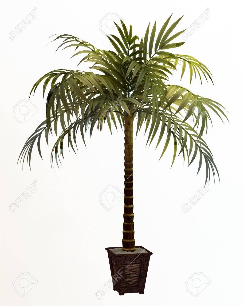 Small decorative tree Stock Photo - 10016865