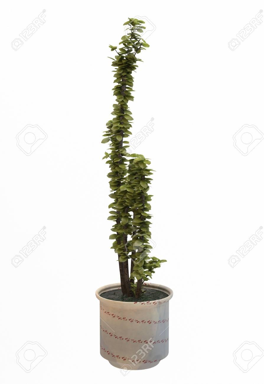 petit arbre décoratif banque d'images et photos libres de droits