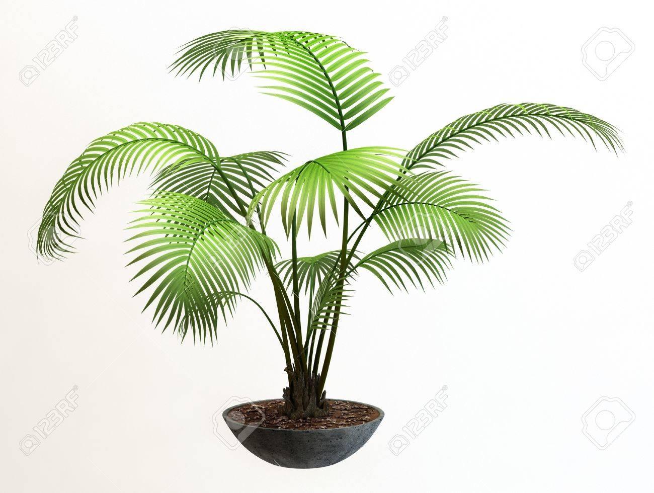 Small decorative tree Stock Photo - 11140363