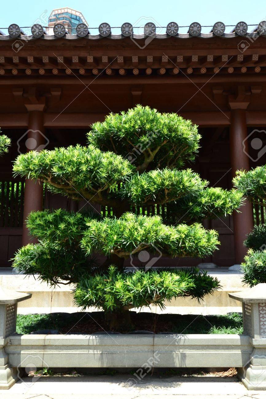Décoration D\'arbre Dans Un Jardin Chinois, Chi Lin Nunnery à Diamond ...