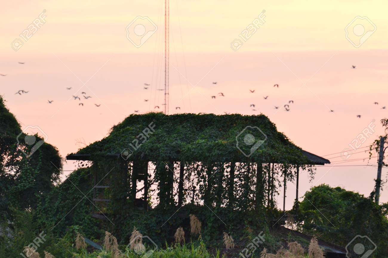 Old abandoned house in the garden,Ayutthaya province.Thailand. Stock Photo - 17194799