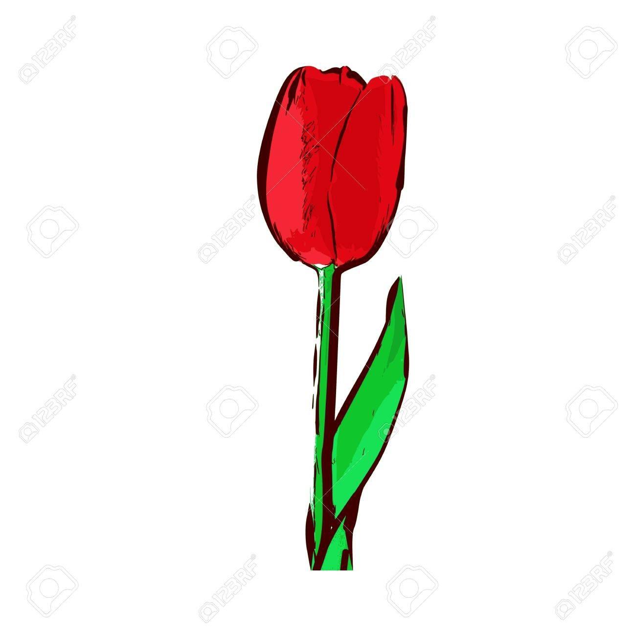 tulip - vector Stock Vector - 13285654