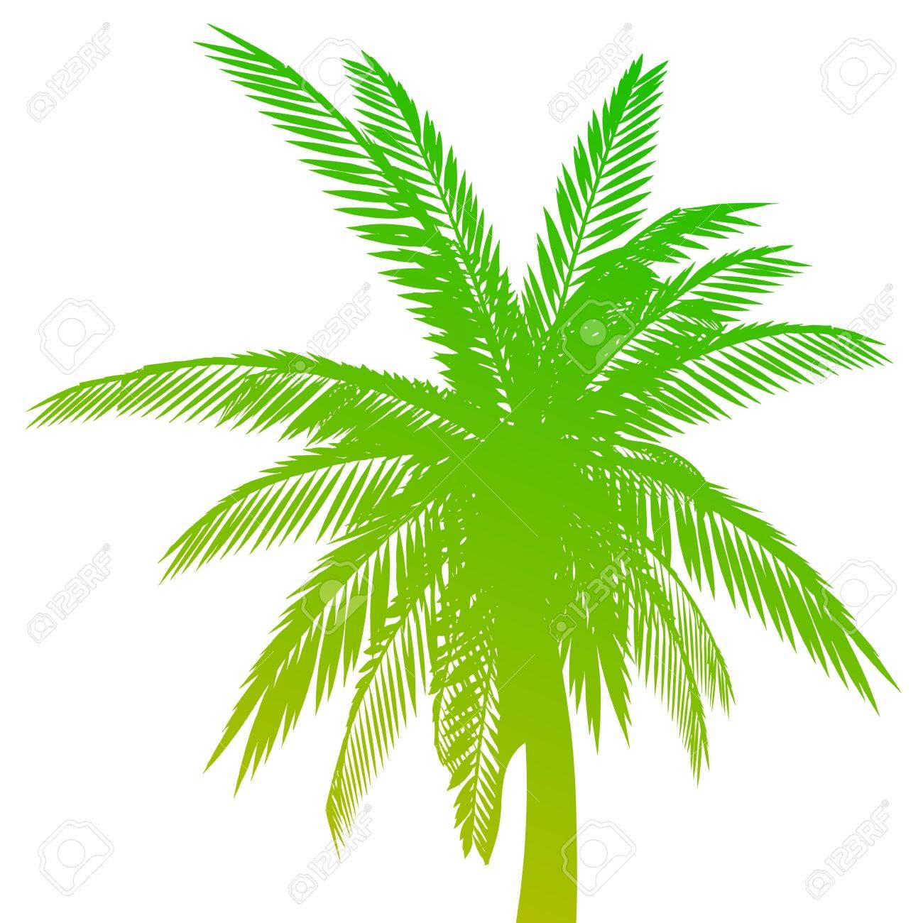 Palm. Isolated - vector - 13494279