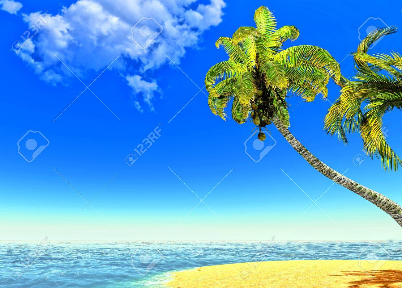 Beach and palms Stock Photo - 14324724