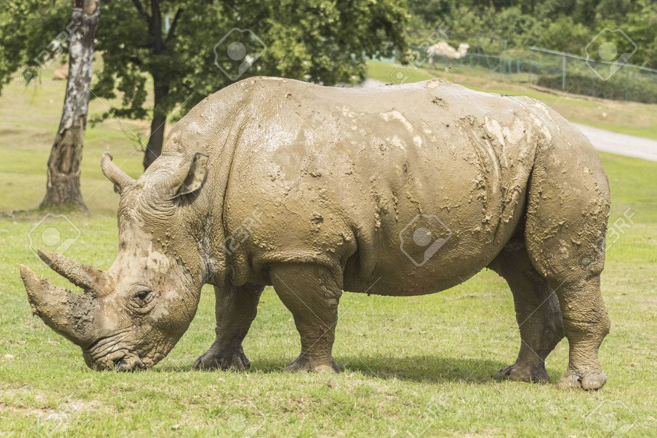 Dirtyrhino