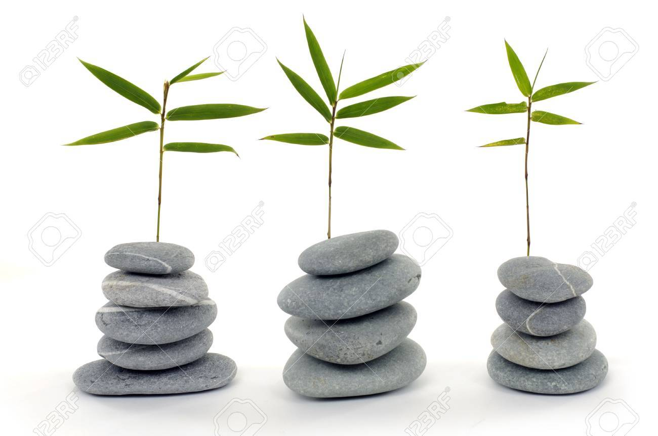 Row of fresh bamboo leaves with zen stone Stock Photo - 6057970