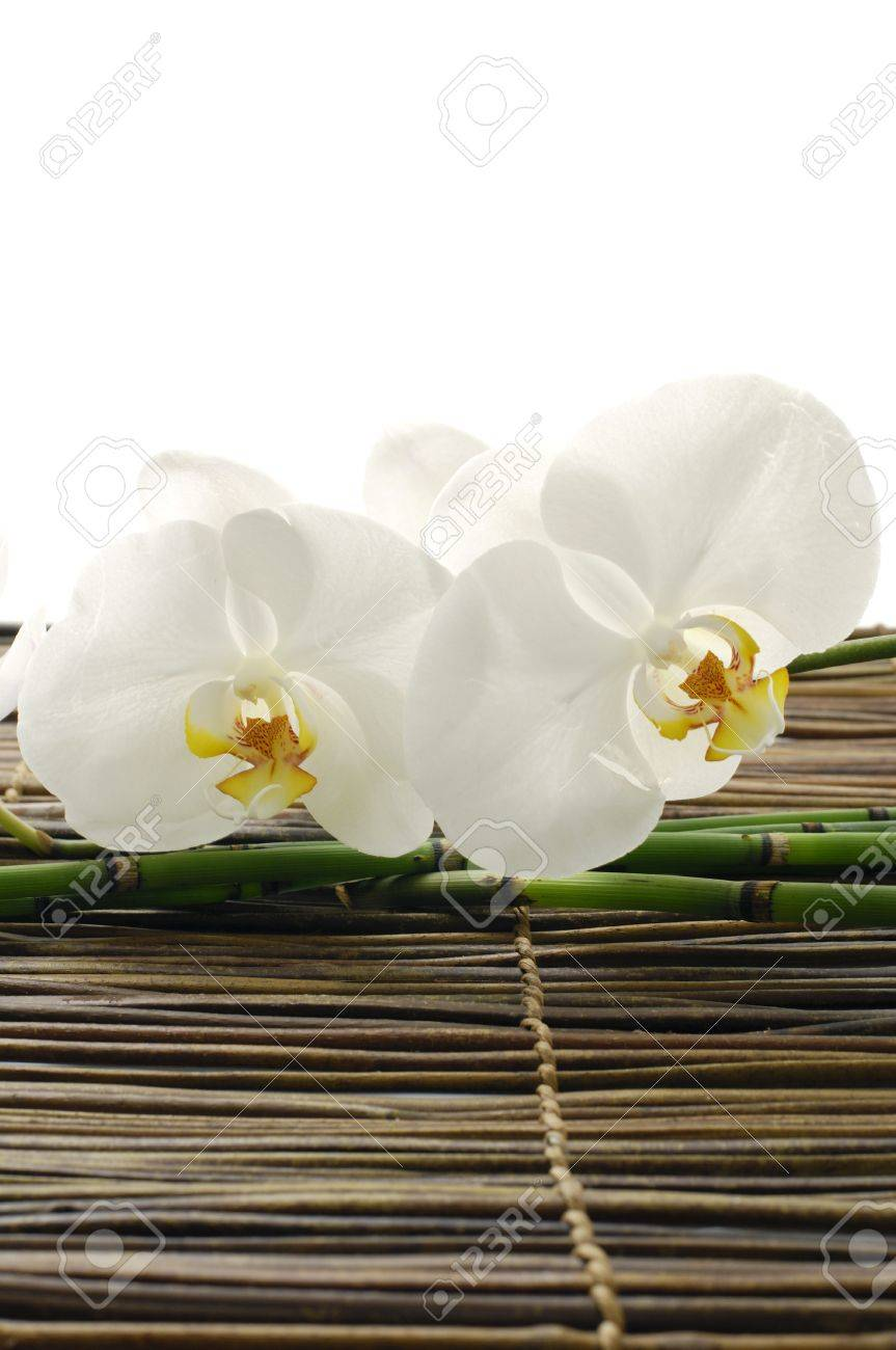 White orchid Spa Stock Photo - 11058282