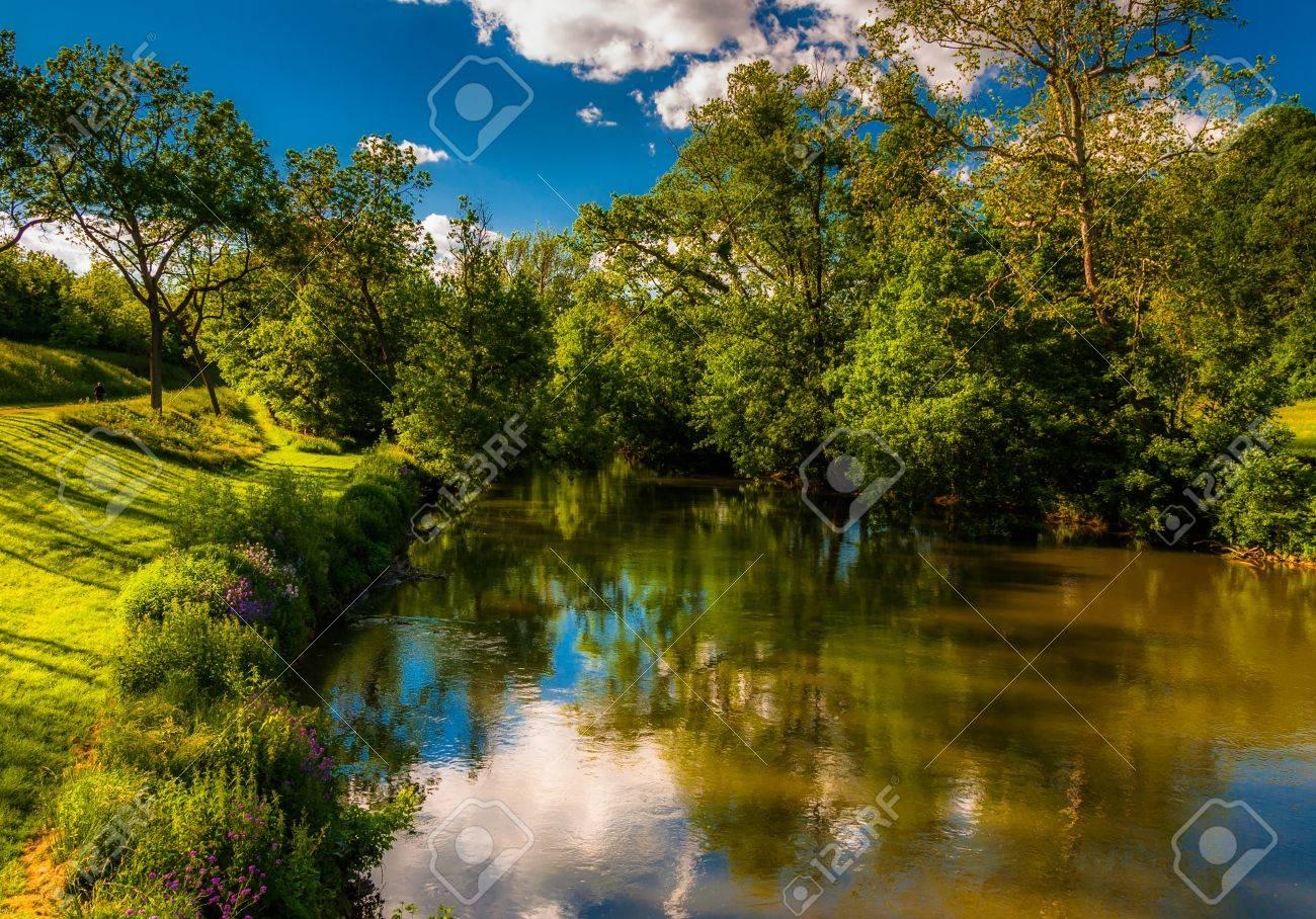 Antietam Creek Maryland Trees in Antietam Creek