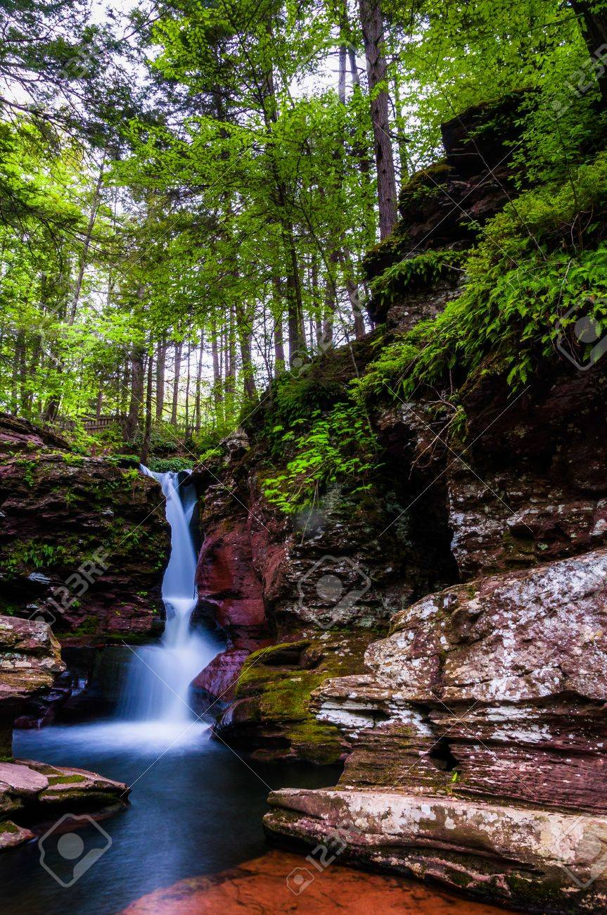 Adam's Falls and tall trees in Rickett's Glen State Park, Pennsylvania. Stock Photo - 20759403