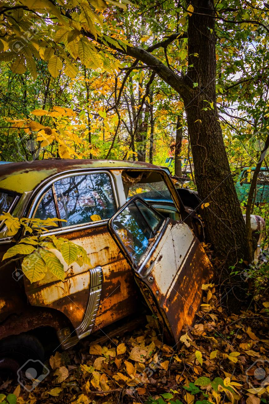 Cars and tree in a junkyard. Stock Photo - 25096165
