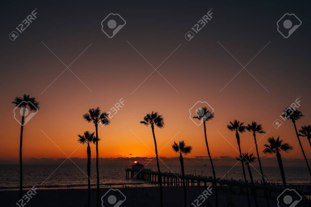 Palm trees and the pier at sunset, in Manhattan Beach, California - 136709947