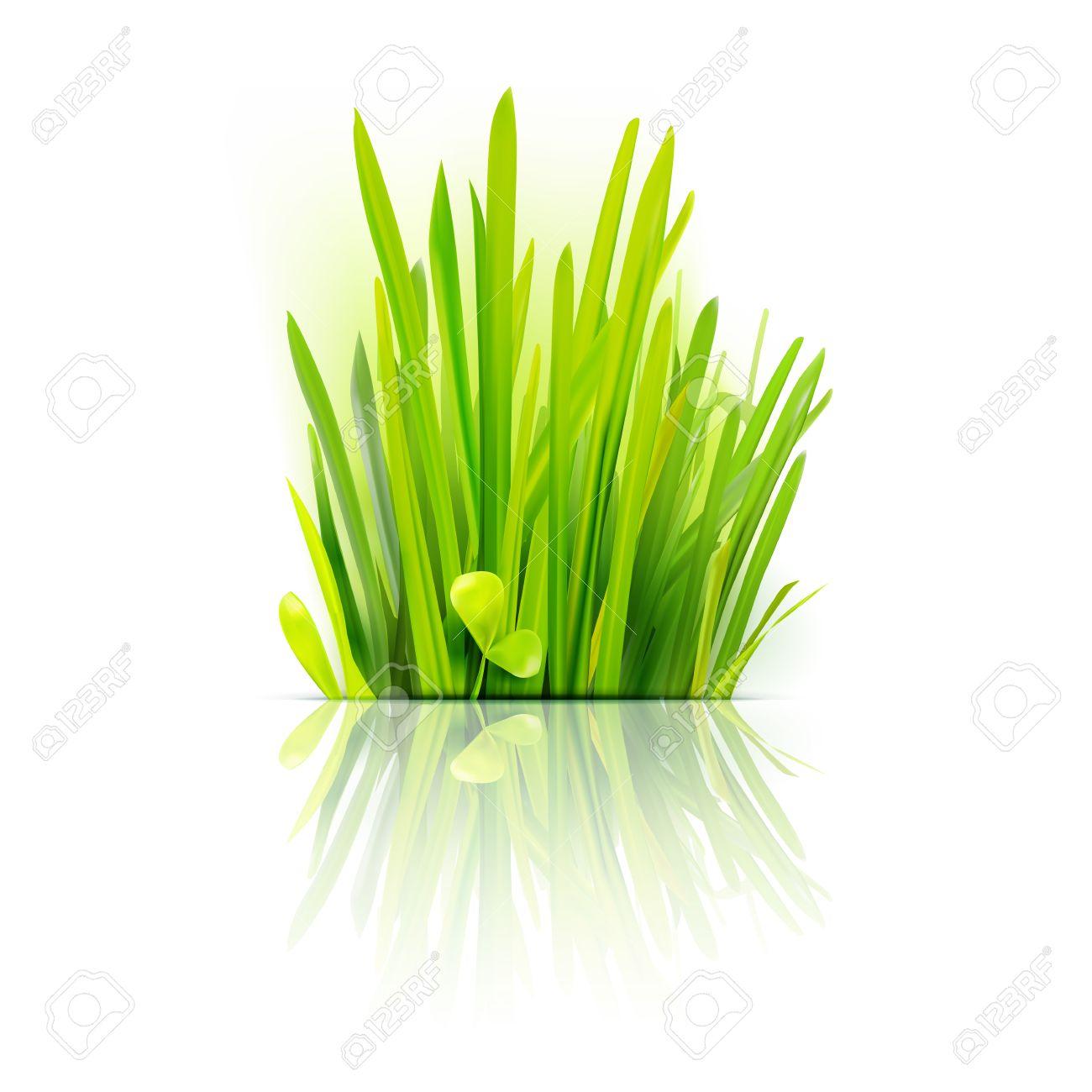 Realistic grass design element. Eco friendly field illustration. Summer green . Growth flora emblem. - 43041723