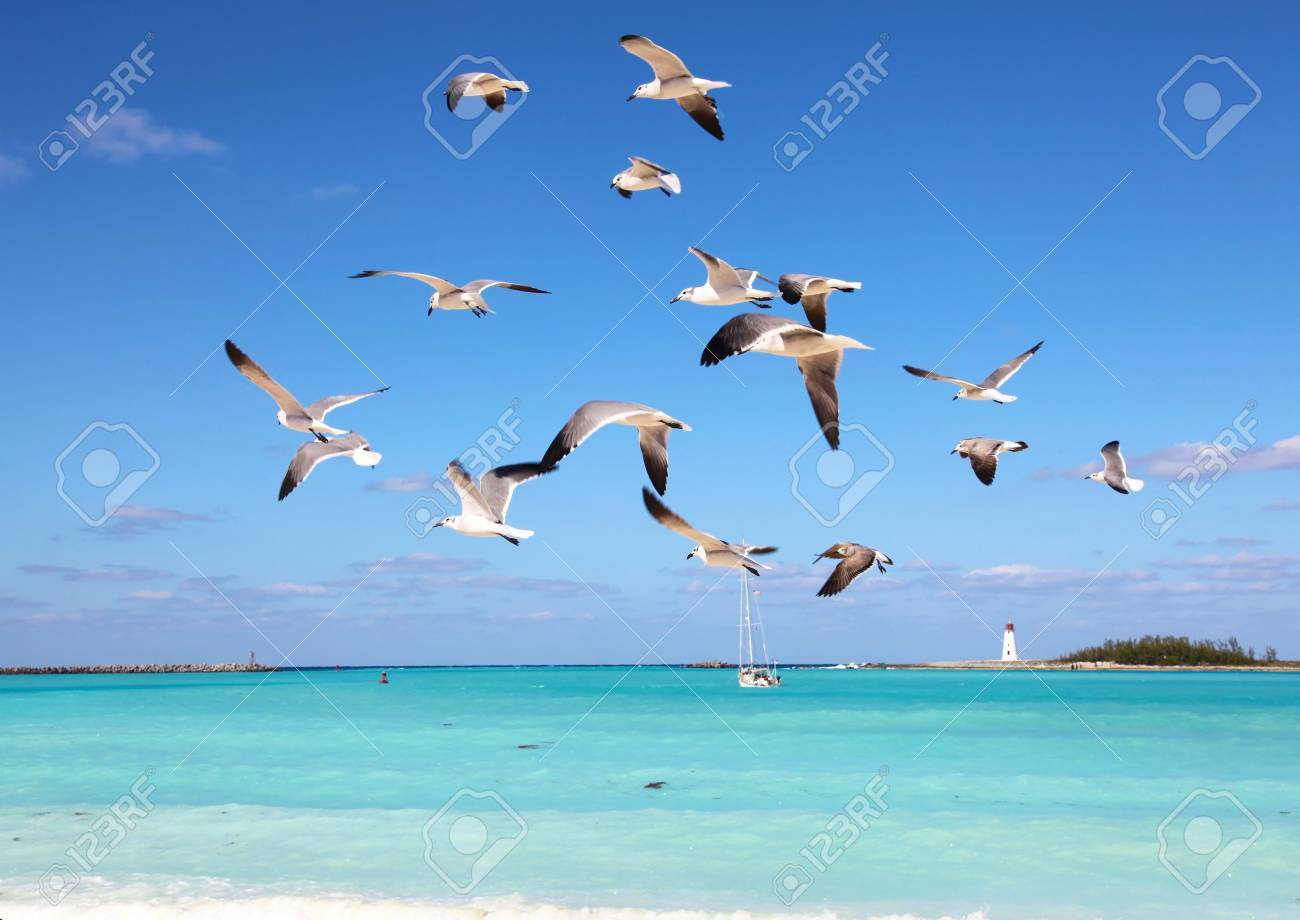Seagulls flying in the harbor, you can see the lighthouse on the horizon Stock Photo - 17644398
