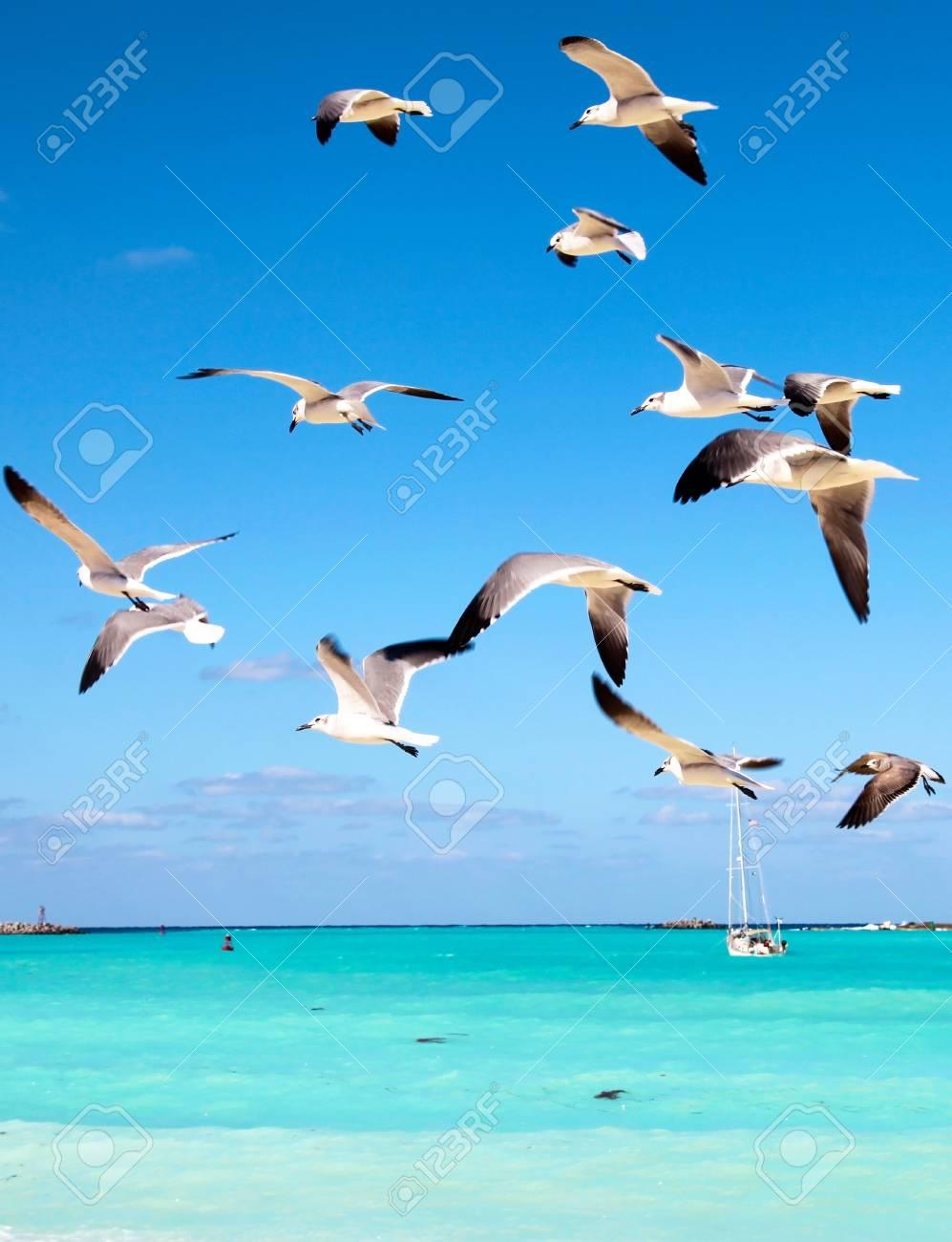 Sea gulls fly over the sea, cutting through a beautiful blue sky Stock Photo - 19620483