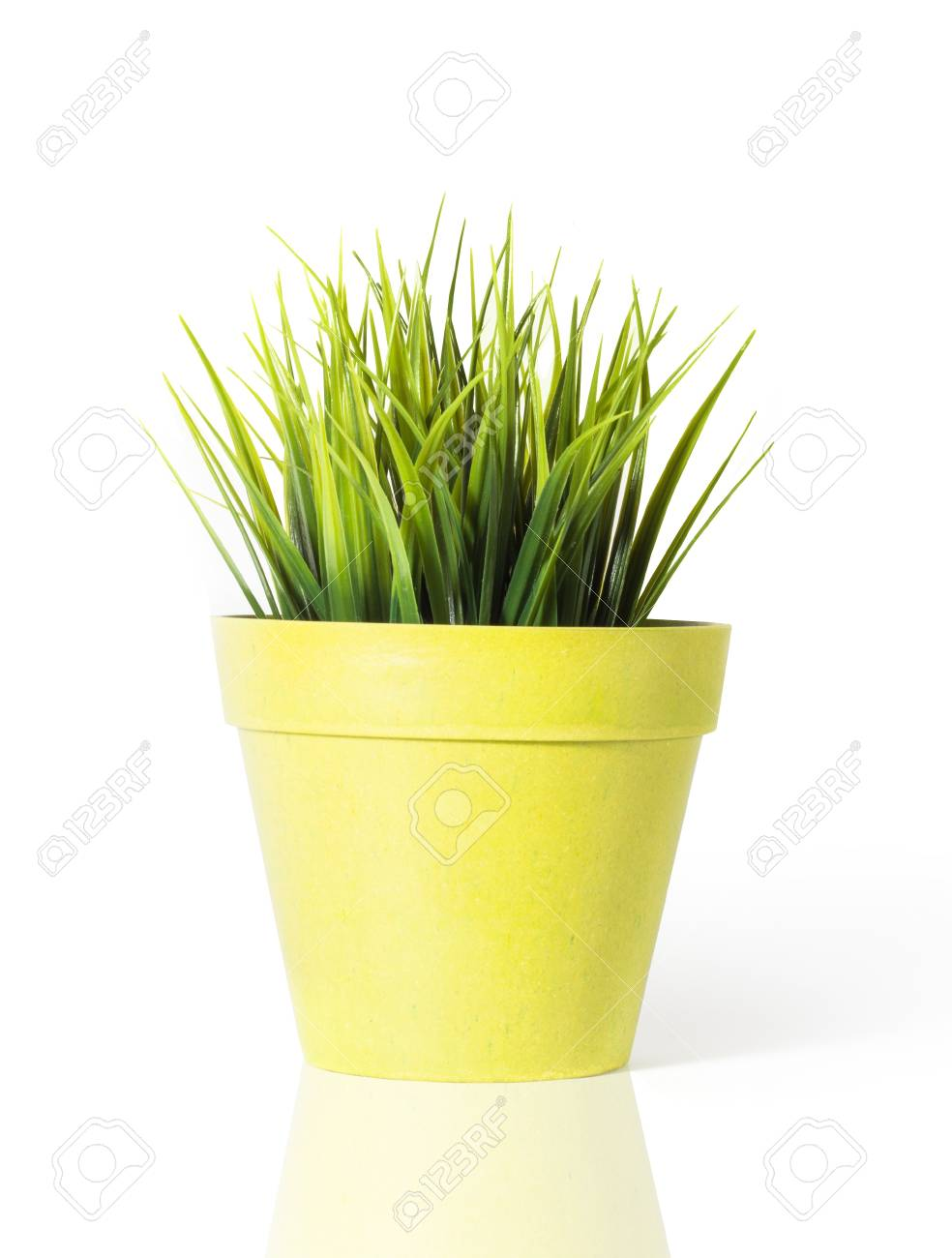 Green Grass In A Yellow Flower Pot Isolated On White Background