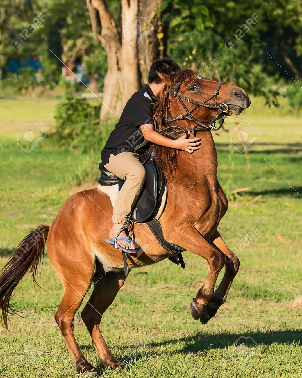 Boy Rider Chestnut Horse Jumping In The Meadow Stock Photo Picture And Royalty Free Image Image 94119095