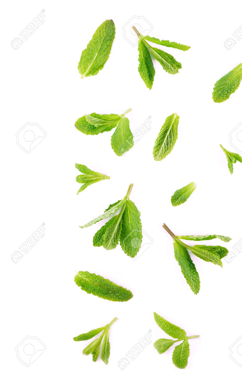 Fresh mint leaves on the white background. - 166263693