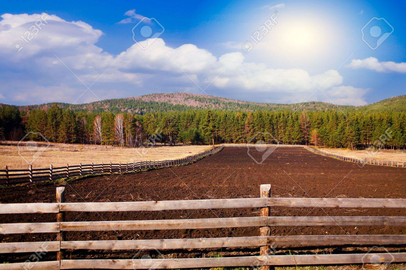 Beautiful rural landscape with  field and sky Stock Photo - 12878707