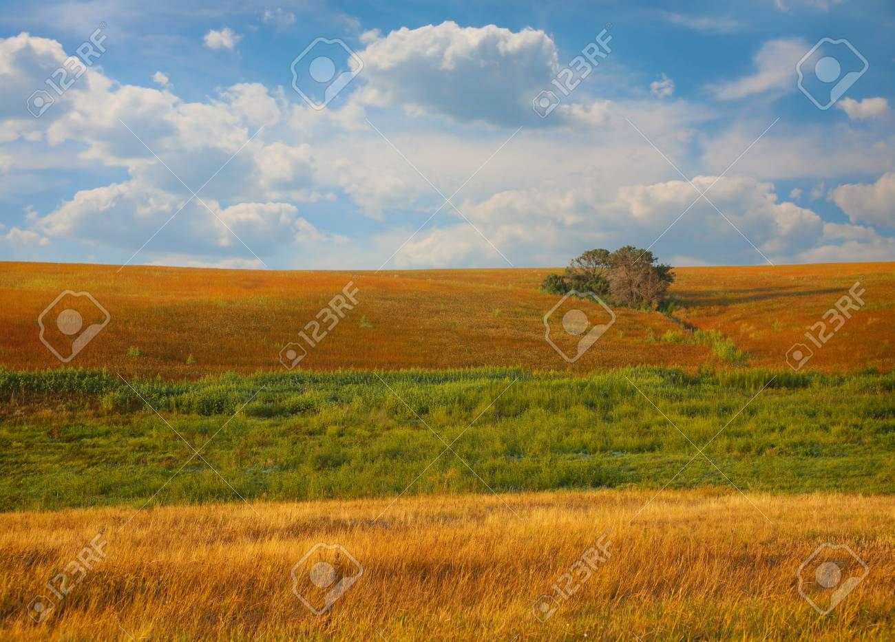 Morning landscape with  field tree and clouds Stock Photo - 16367766