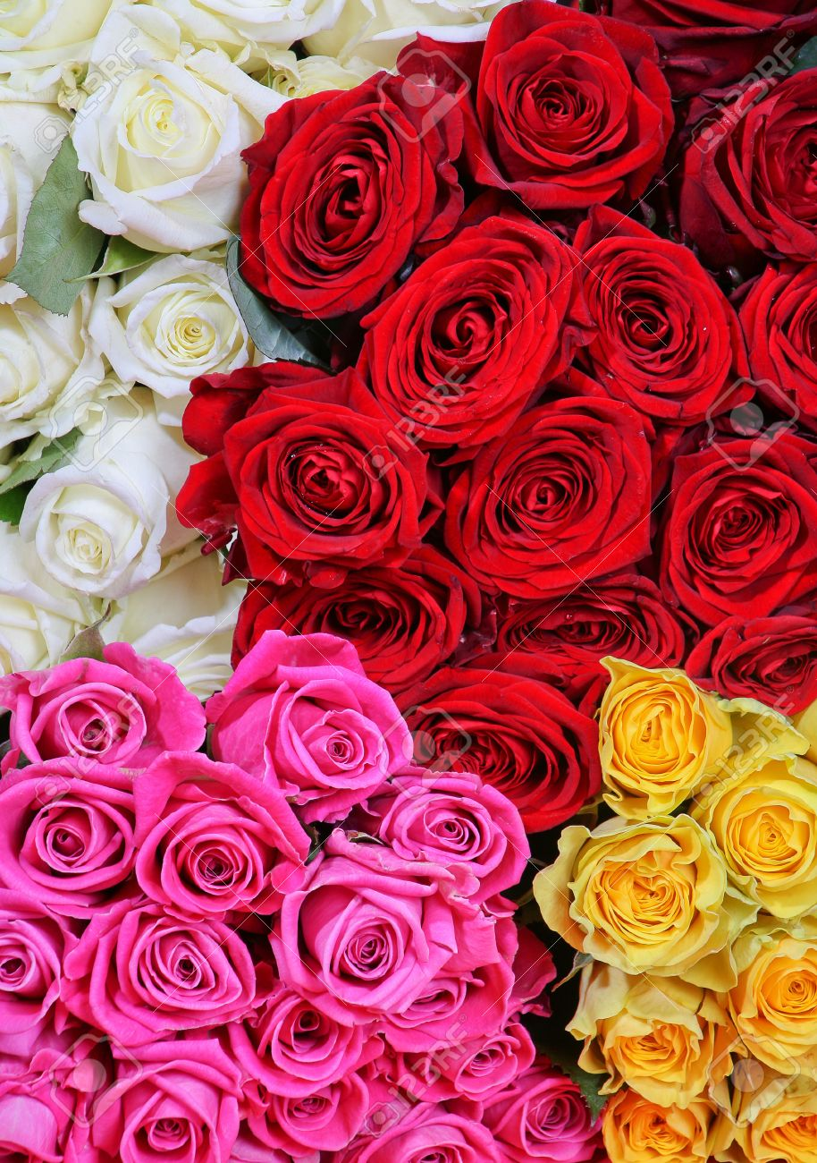 Roses bouquets of red yellow white pink color stock photo picture roses bouquets of red yellow white pink color stock photo 16711515 mightylinksfo Gallery