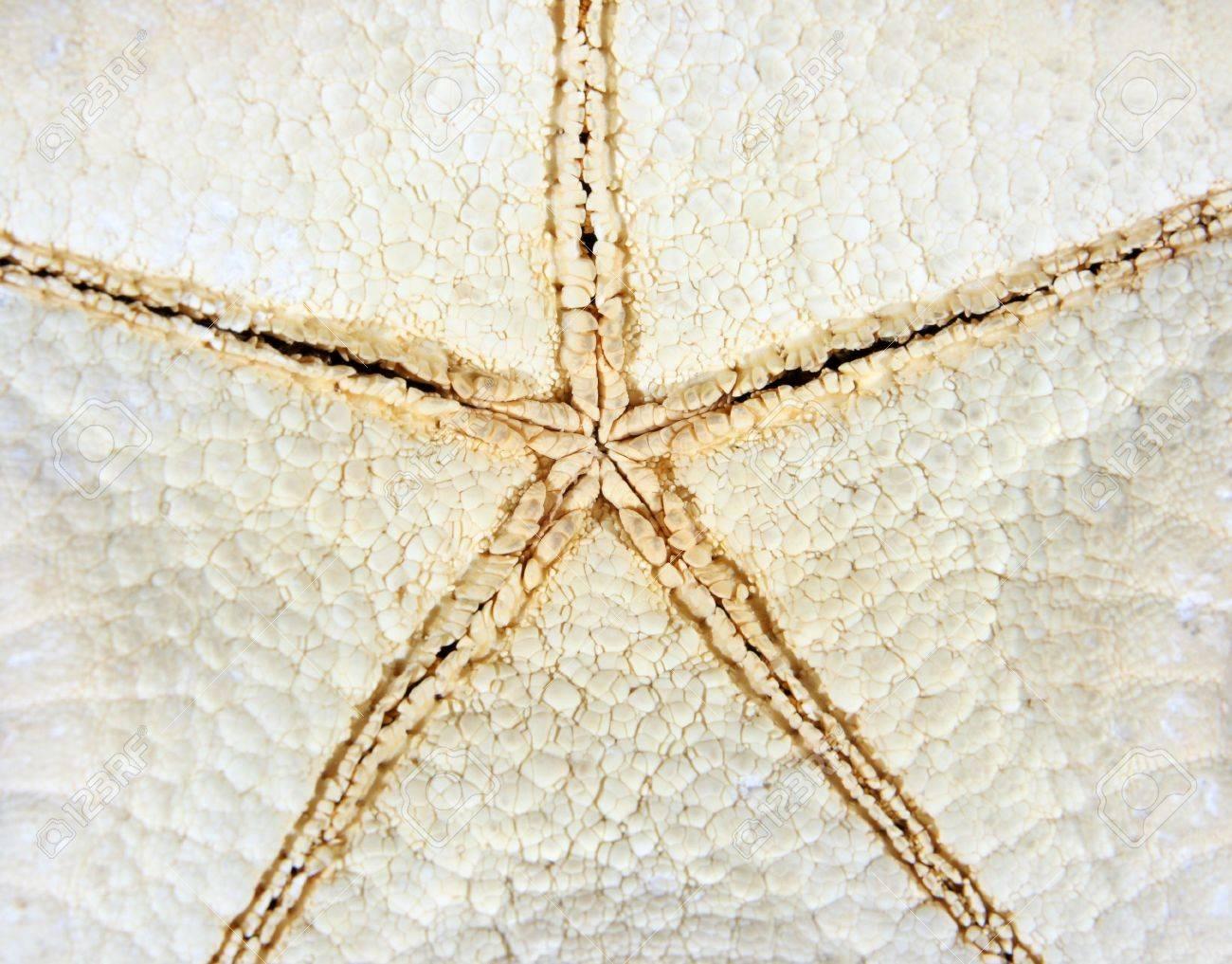 texture of starfish Stock Photo - 5138736