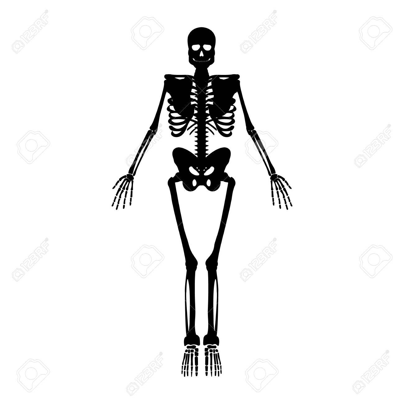 Niedlich Menschliches Skelett Gekennzeichnet Galerie - Menschliche ...