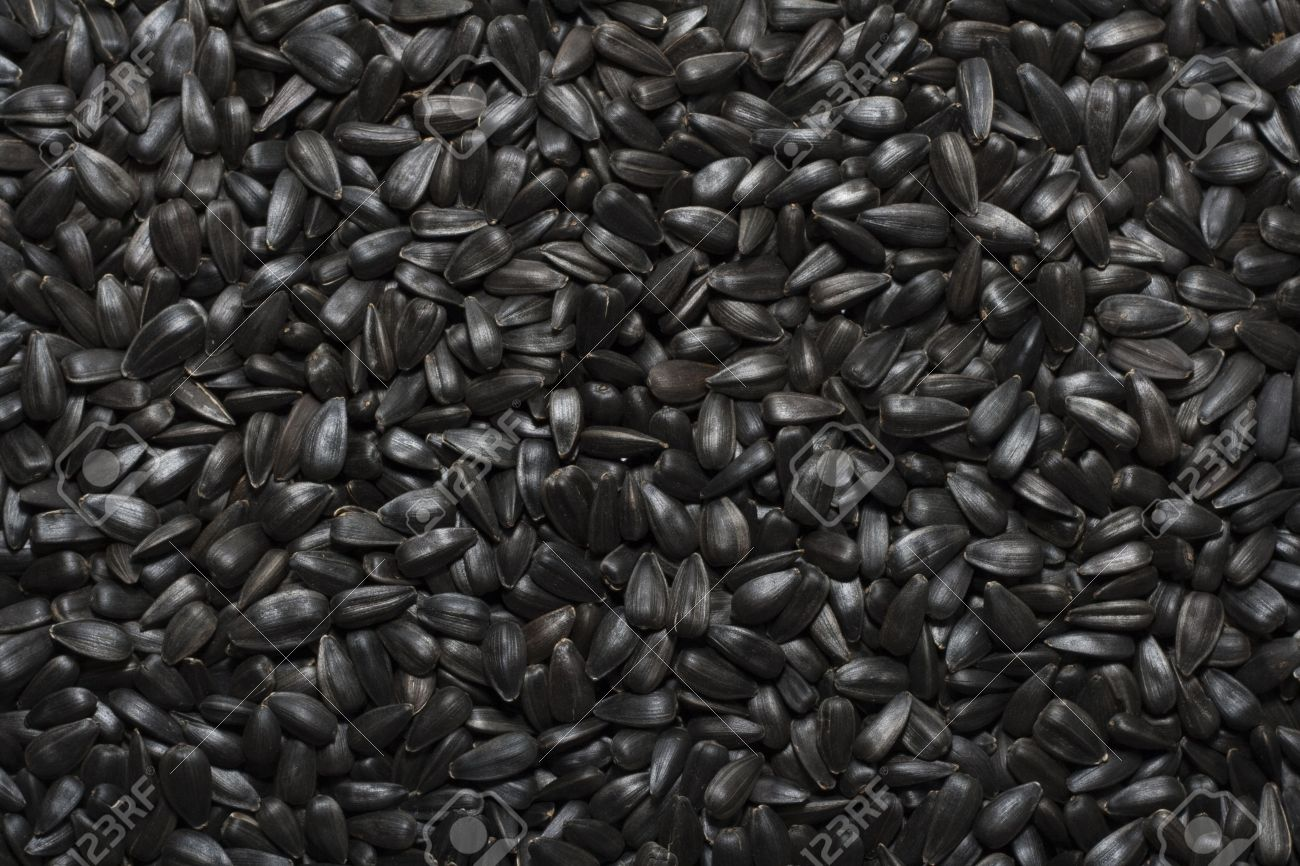 Black Sunflower Seeds For Texture Or Background Stock Photo