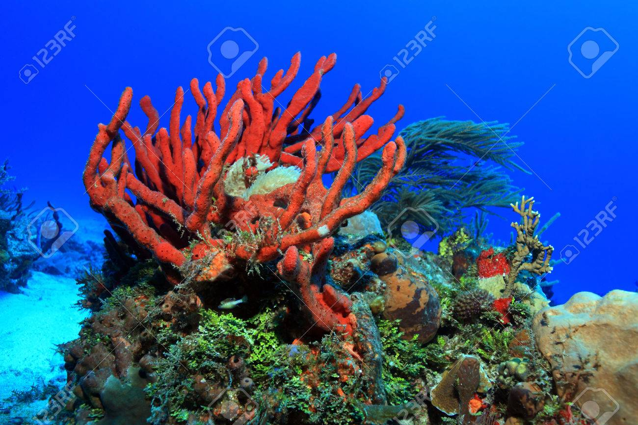 Colorful Tropical Coral Reef Stock Photo, Picture And Royalty Free ...