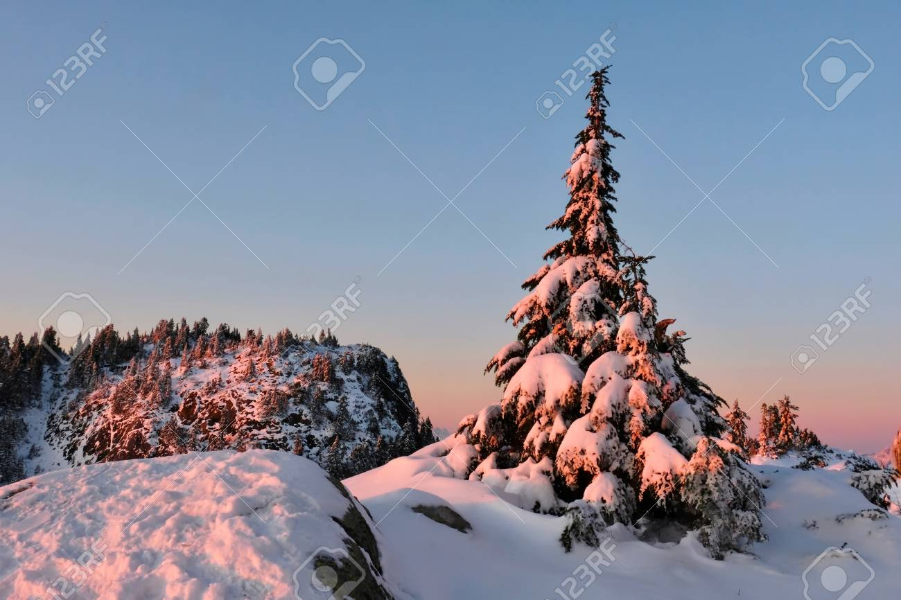 Vancouver Christmas Snow.Christmas Tree Under Snow On Mount Seymour North Vancouver