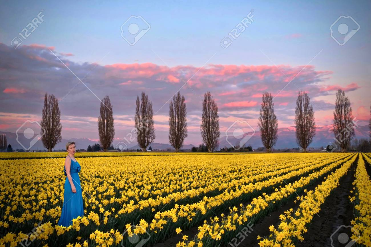Woman in spring fields meadows with yellow flowers romantic stock stock photo woman in spring fields meadows with yellow flowers romantic evening on daffodils fields near seattle mount vernon tulip festival mightylinksfo