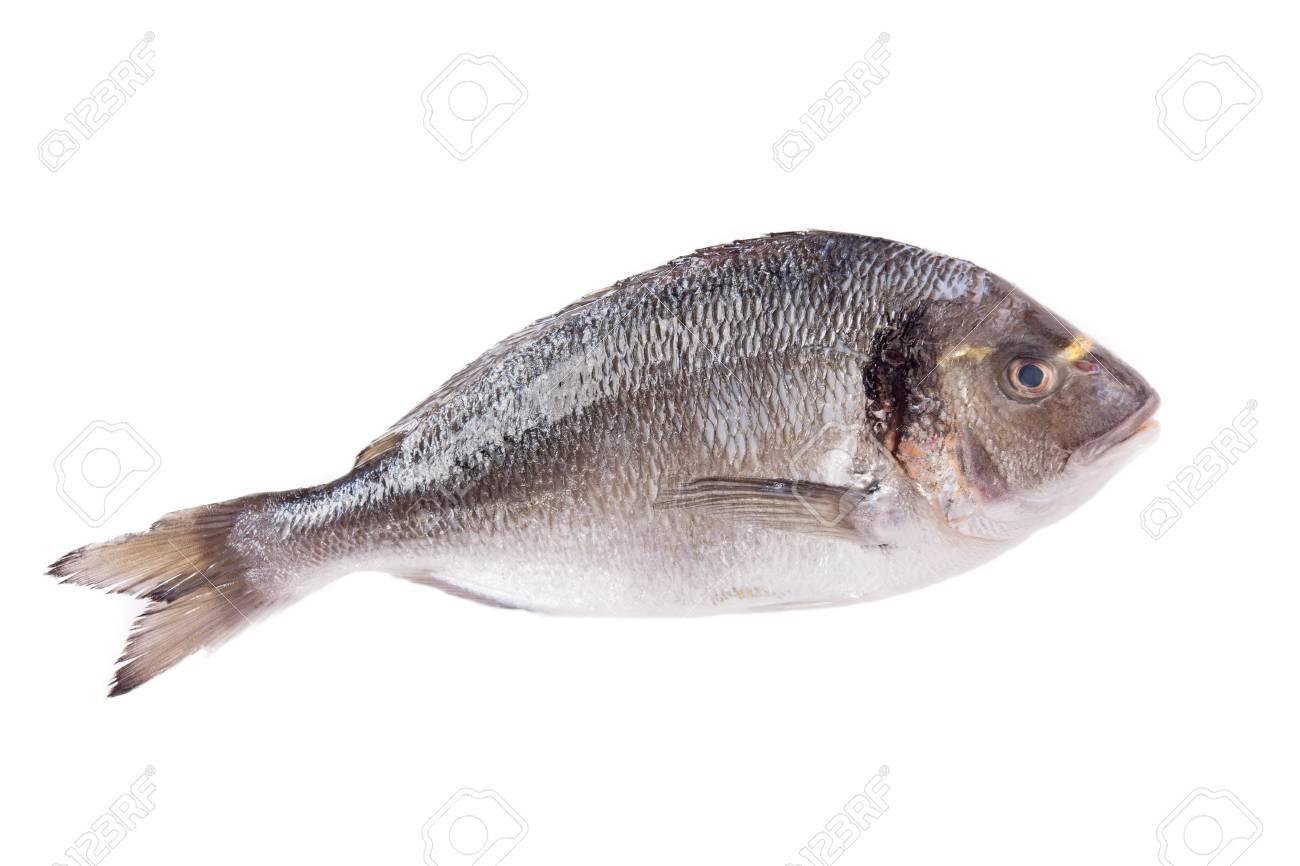 Dorado fish isolated on white background Stock Photo - 17453647