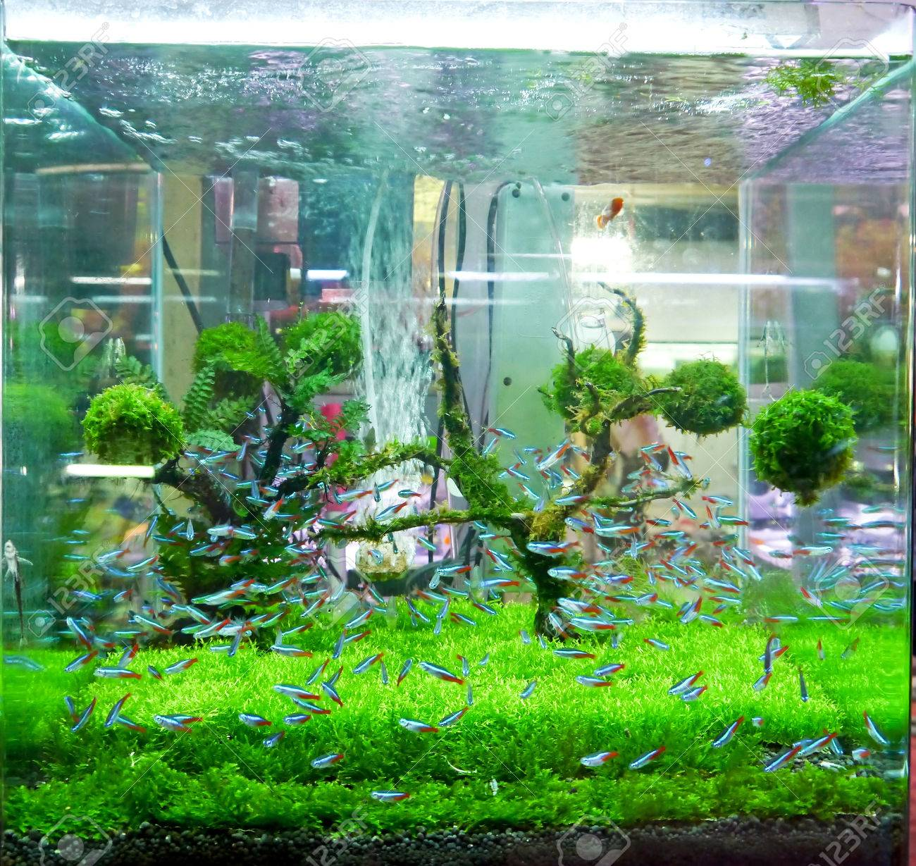 A green beautiful planted tropical fish tank. Stock Photo - 24840478