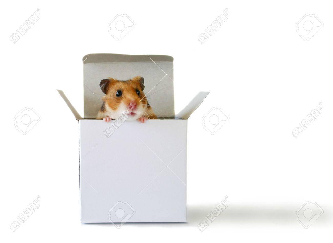 Inside the box Stock Photo - 309129