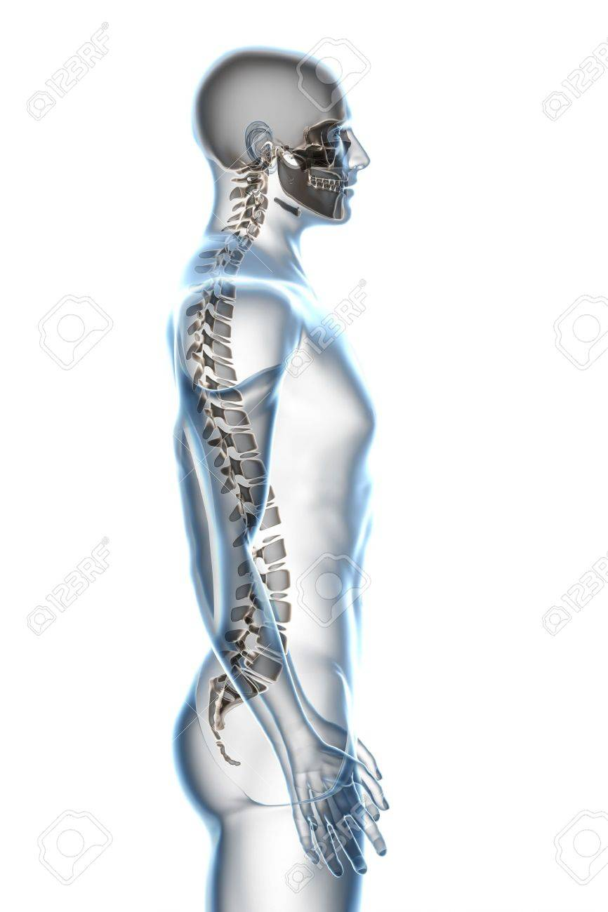 X-ray male anatomy over a white background Stock Photo - 5195848