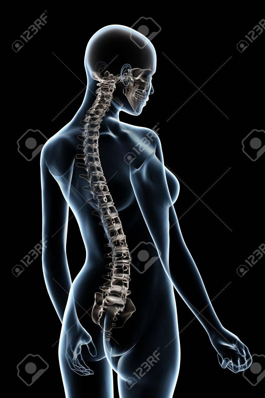 X-ray Weibliche Anatomie über Einen Schwarzen Hintergrund ...