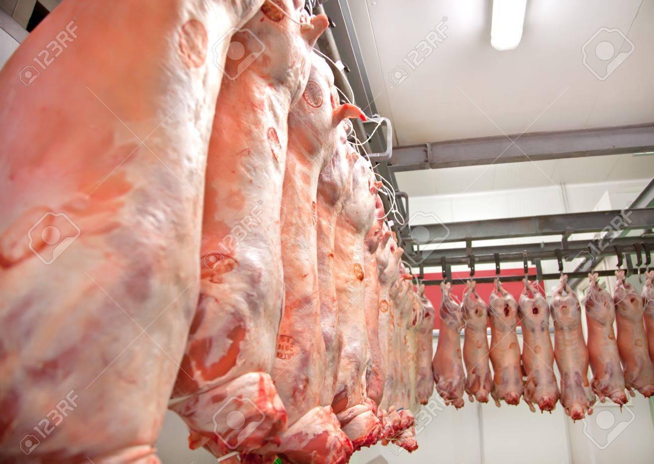子羊の食肉工場で行 ロイヤリテ...