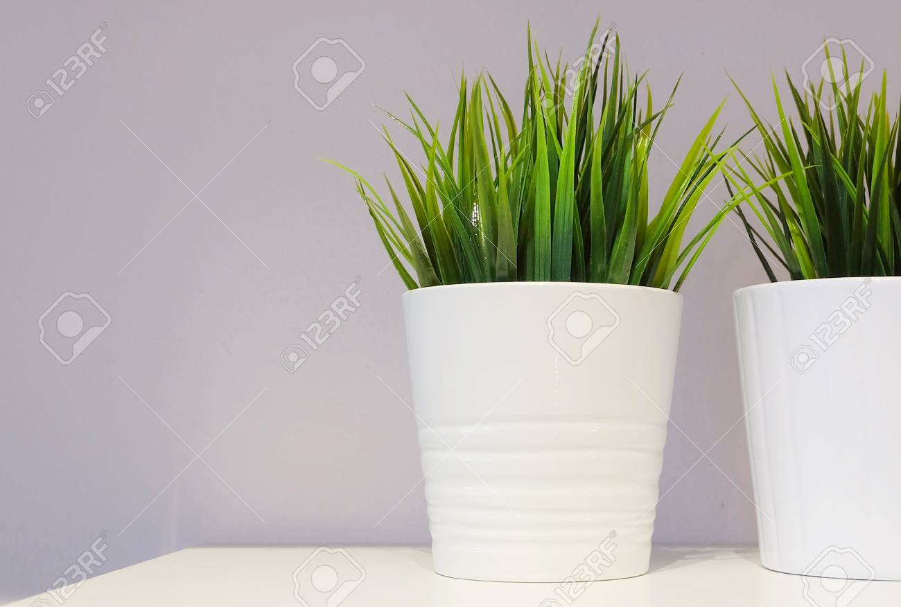 Artificial Green Plant Or Artificial Grass In Ceramic Pot On Stock