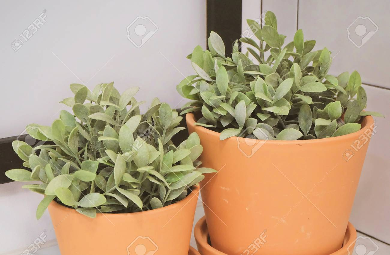 office flower pots. Artificial Green Plants In Pottery Flower Pots For Home And Office Decoration Without The Care.