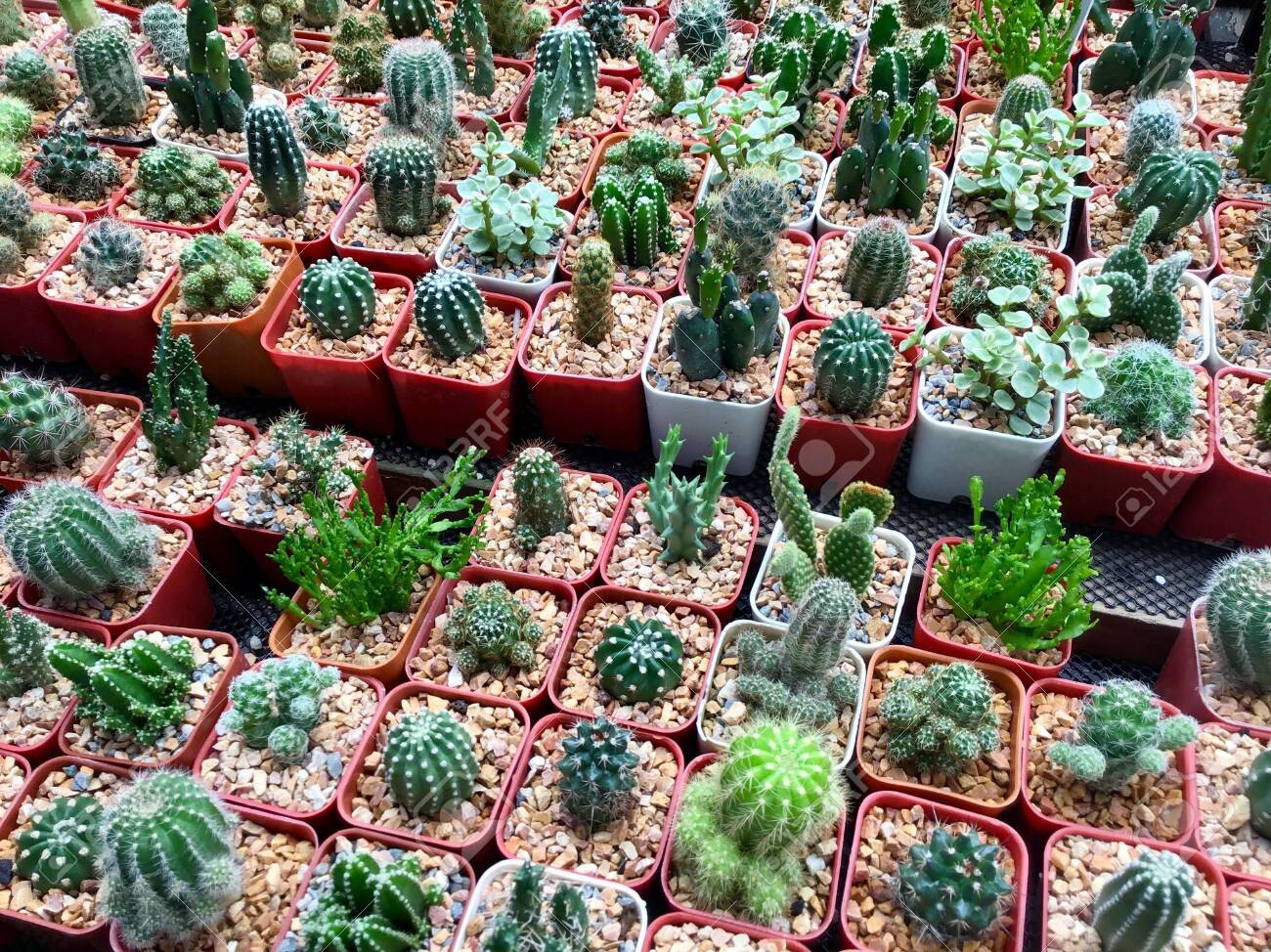 Assorted Beautiful Cactus Plants In Flower Shop For Garden Decoration.  Stock Photo, Picture And Royalty Free Image. Image 129828018.