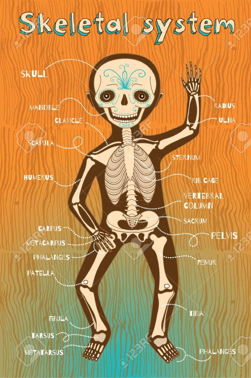 Human Skeletal System For Kids Vector Color Cartoon Illustration