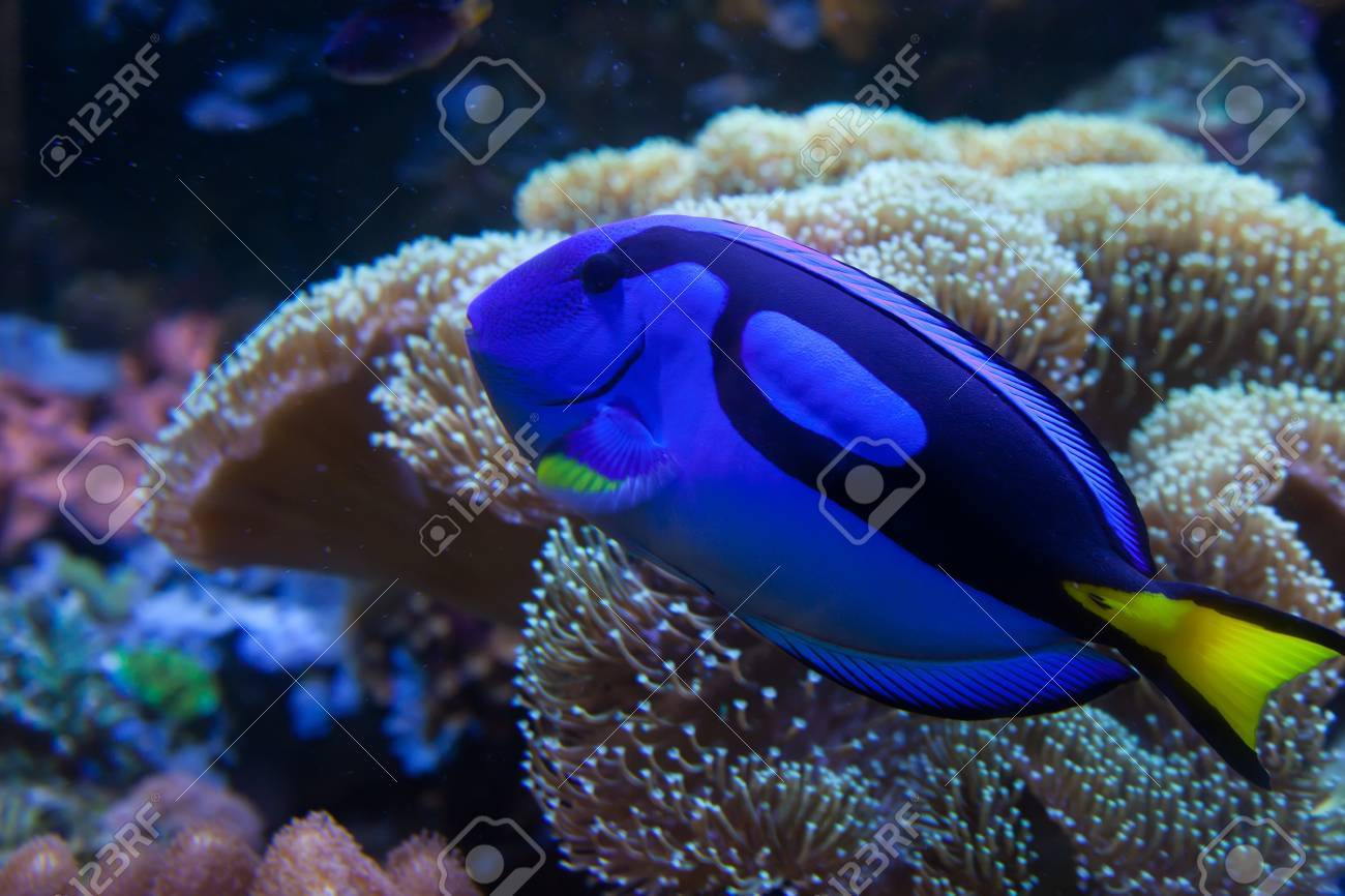 Exotic Aquarium Fish Stock Photo Picture And Royalty Free Image