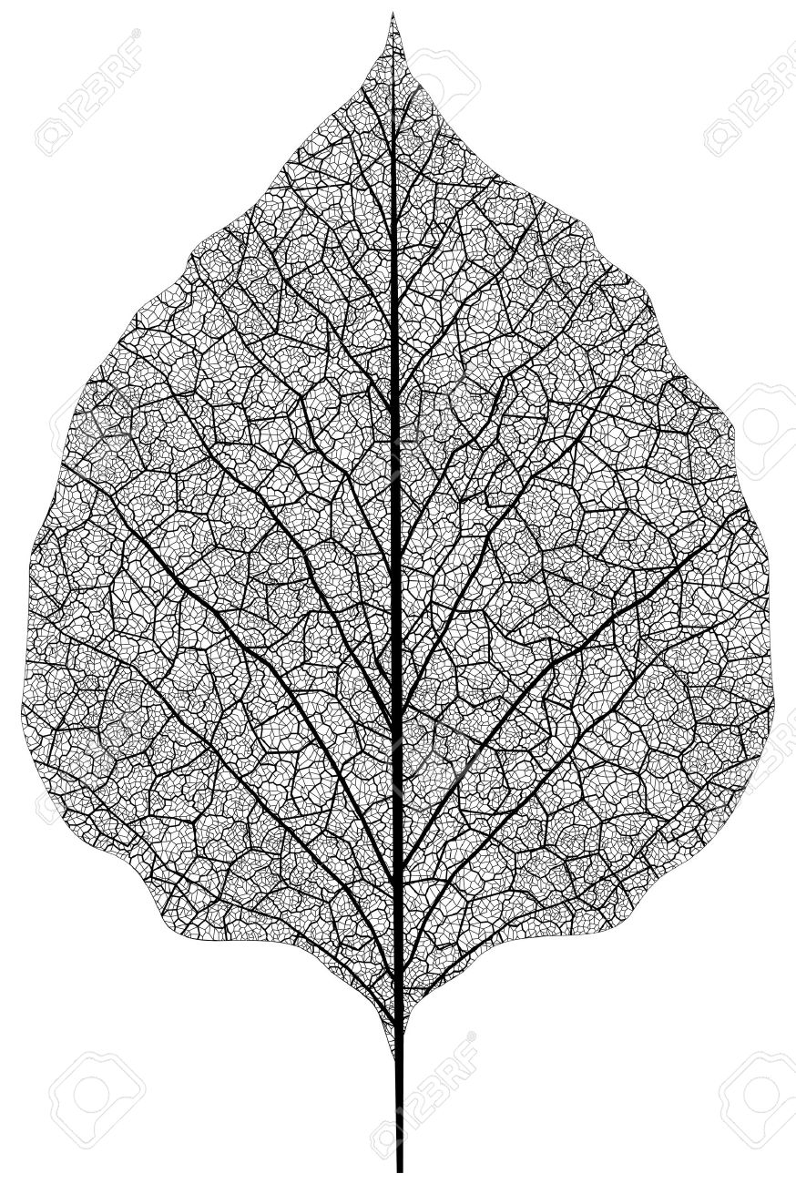 Manually Drawn Leaf Skeleton