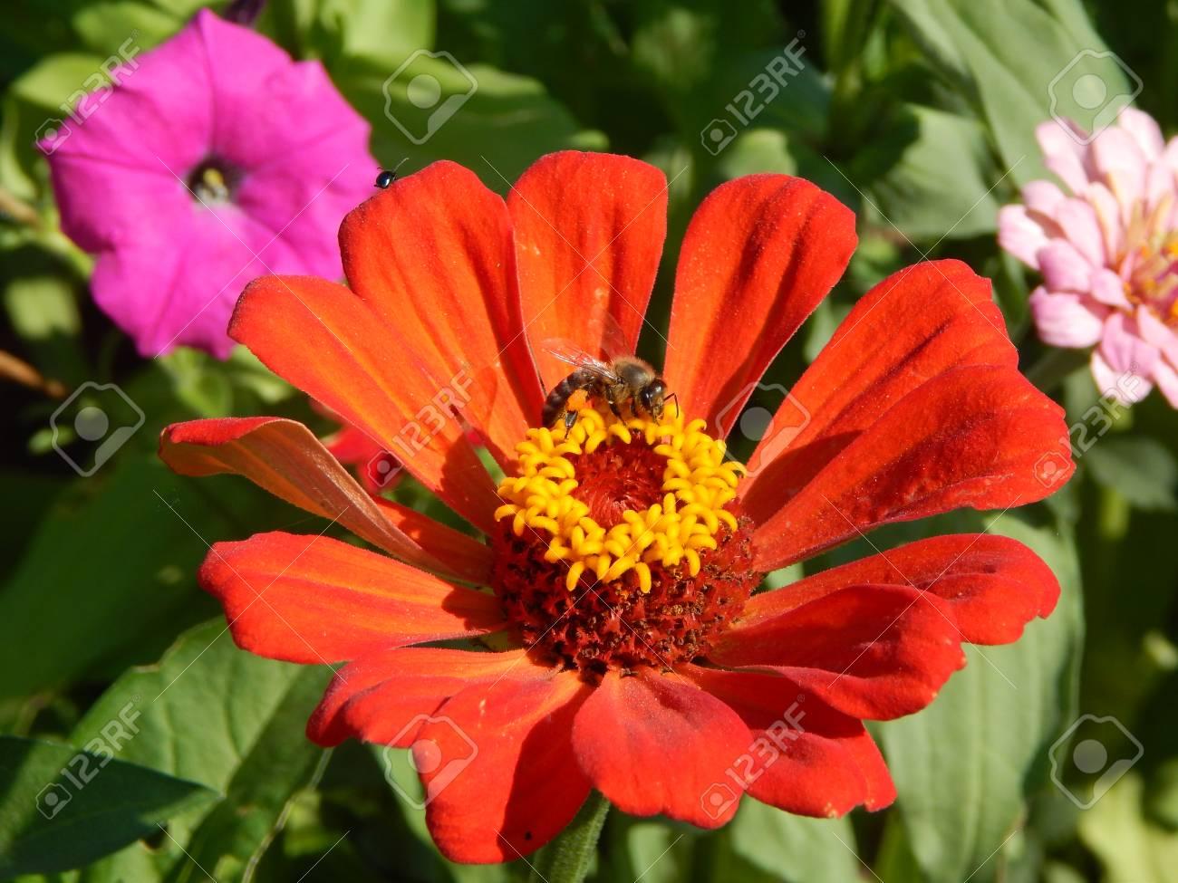 Bouquet De Fleurs Dans La Texture De Fond D Ecran De Fond De Jardin