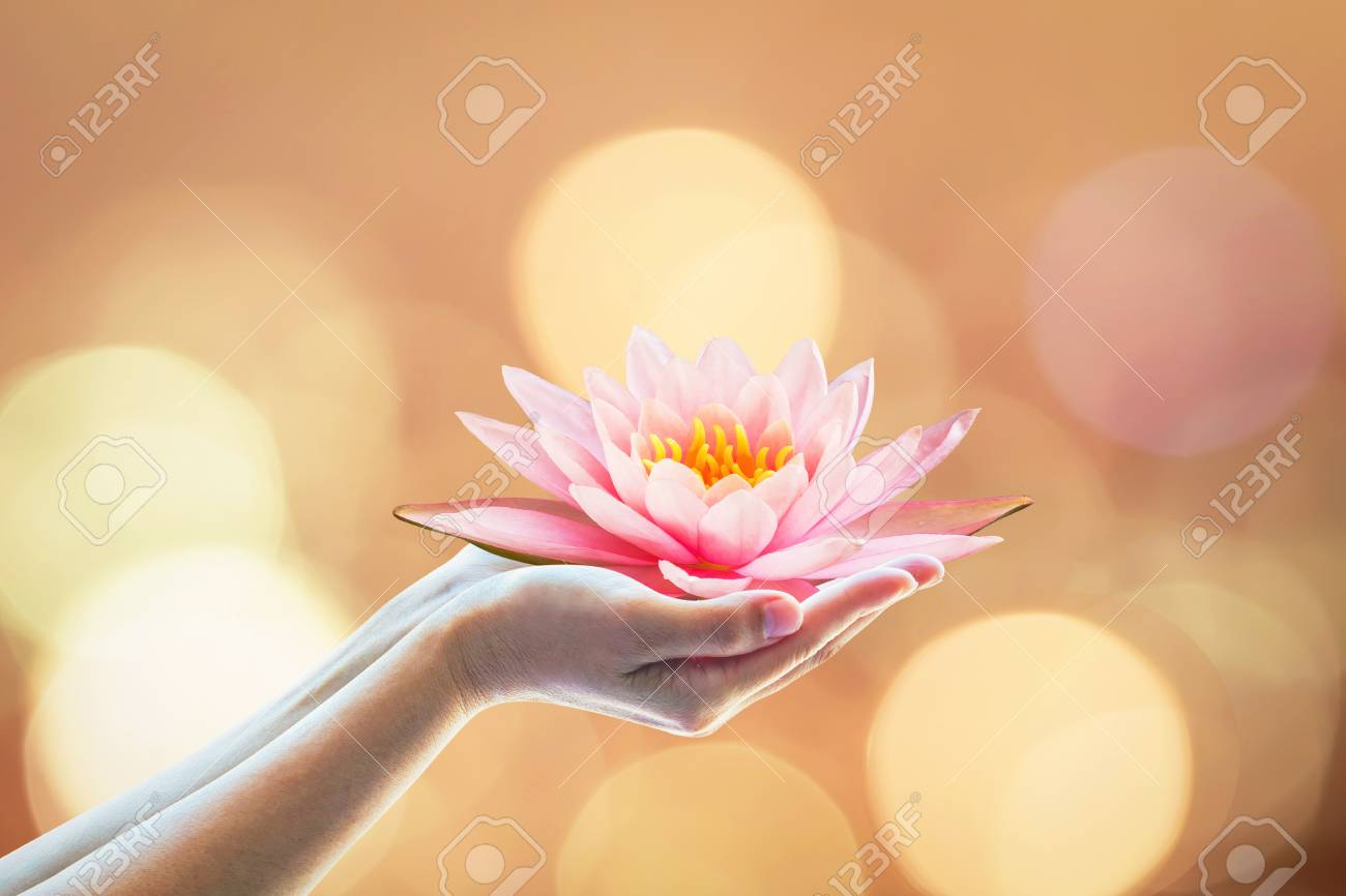 Vesak day, Buddhist lent day, Buddha's birthday worshiping concept with woman's hands holding water Lilly or lotus flower - 116067201