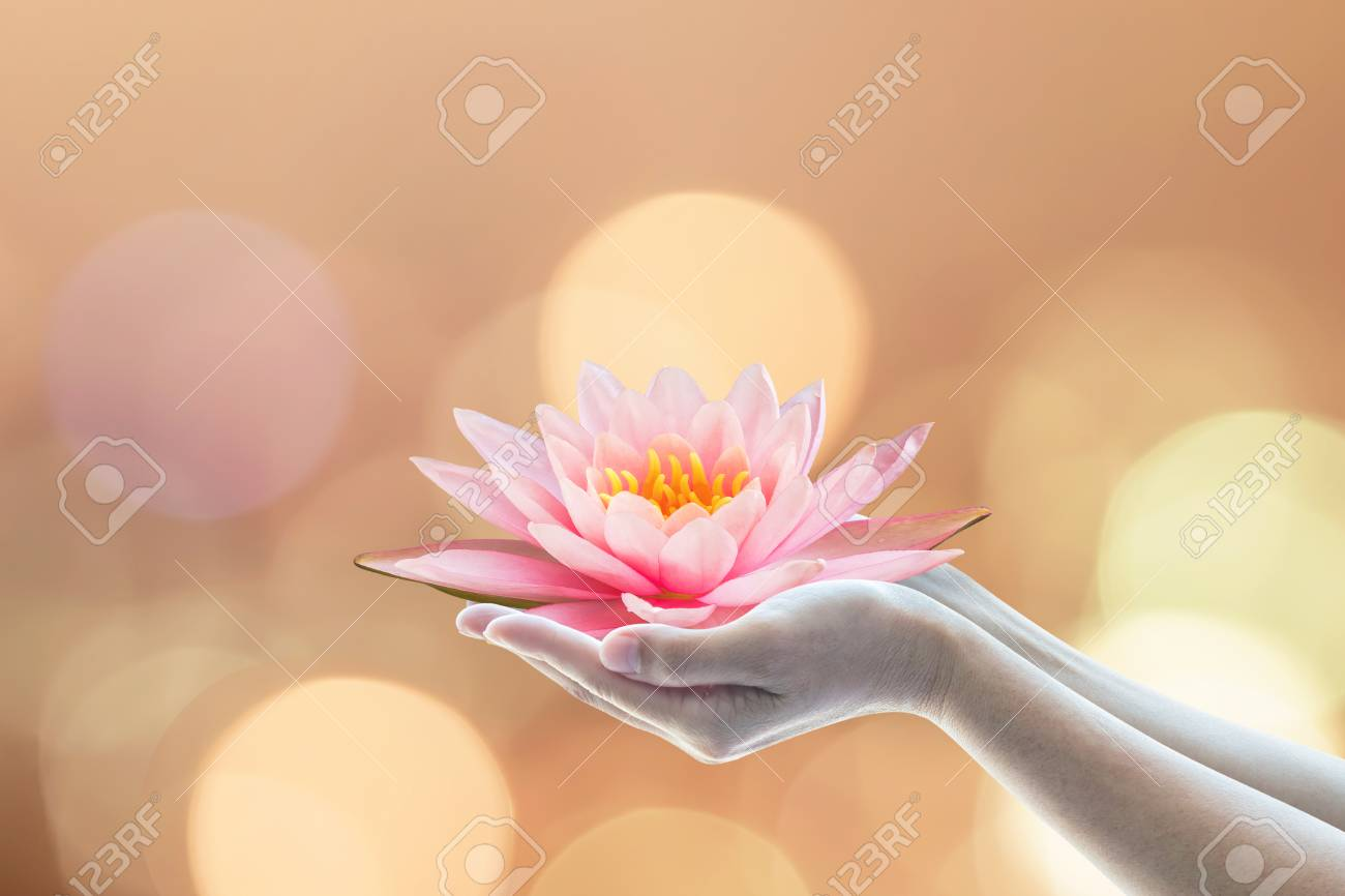 Vesak day, Buddhist lent day, Buddha's birthday worshiping concept with woman's hands holding water lilly or lotus flower - 116067203