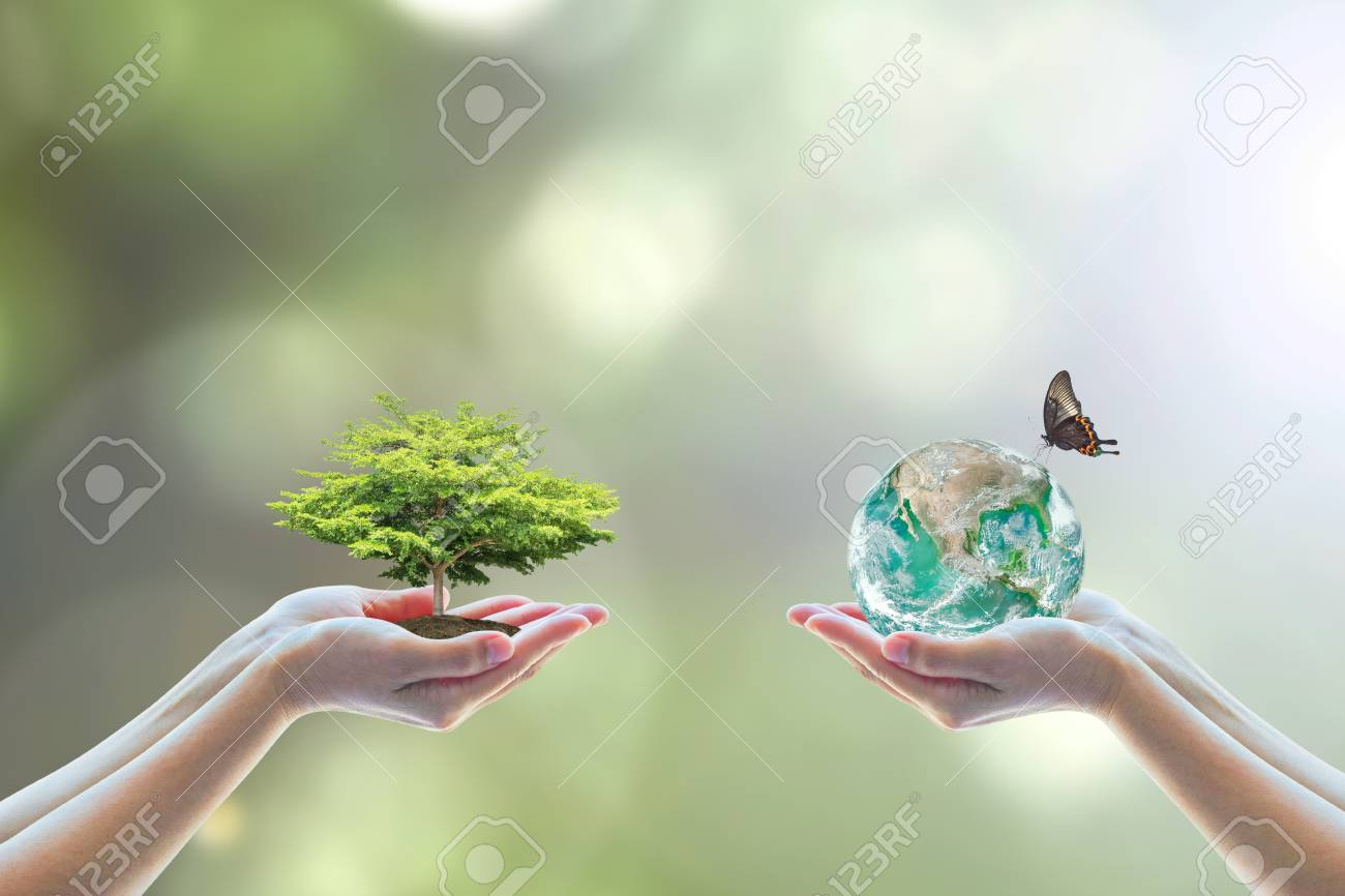 Two human hand planting perfect growing tree earth on natural background greenery Arbor reforestation conservation csr esg peace campaign World environment day - 116067207