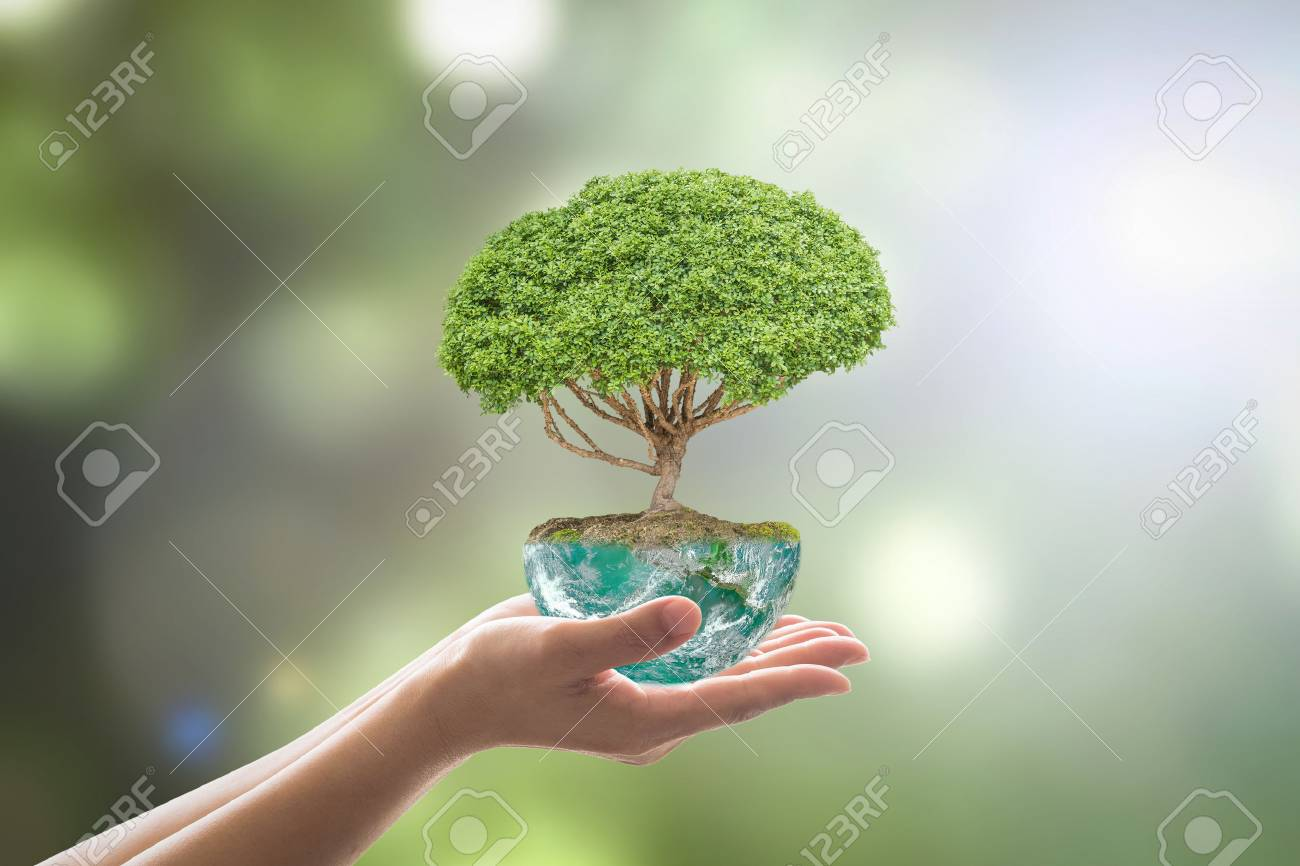 Planting tree in green globe planet on volunteer's hands for world environment day, eco friendly concept. - 116055965